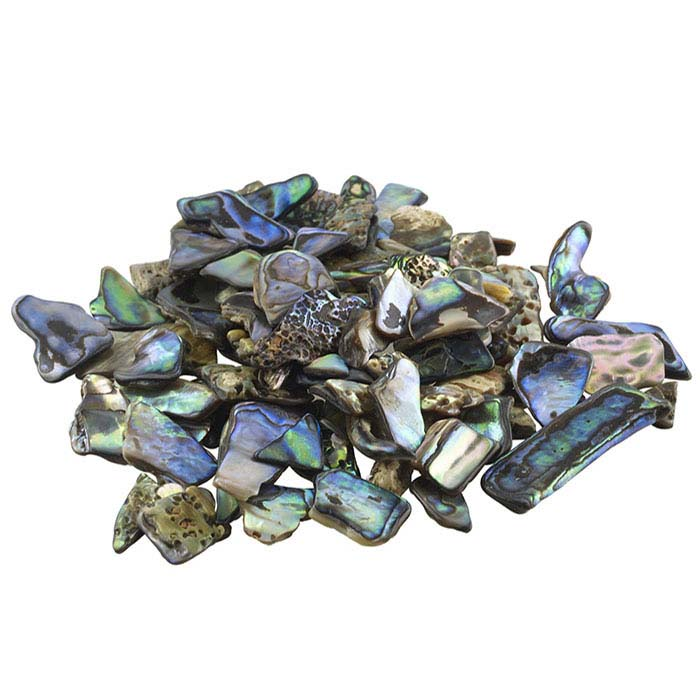 Paua Shell Extra-Small Pieces